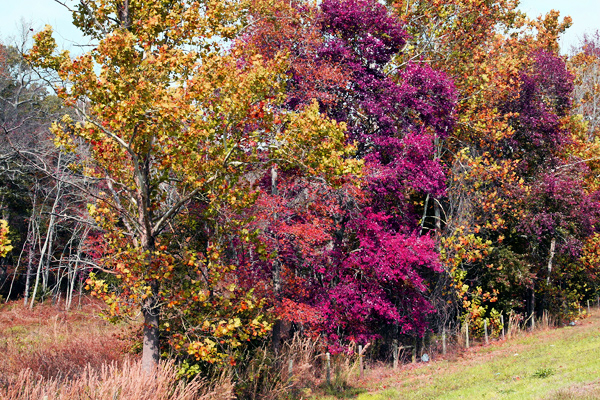 Photos east texas fall colors and spring flowers spring colors 2009 mightylinksfo
